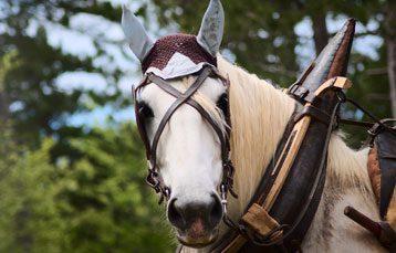 Horse Barn Management App